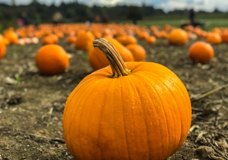 Find all of the pumpkin patches and other fall activities, like corn mazes and hay rides!