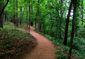 Northwest Arkansas has biking trails throughout the region, with unpaved trails, gravel roads, and trails off the beaten path.